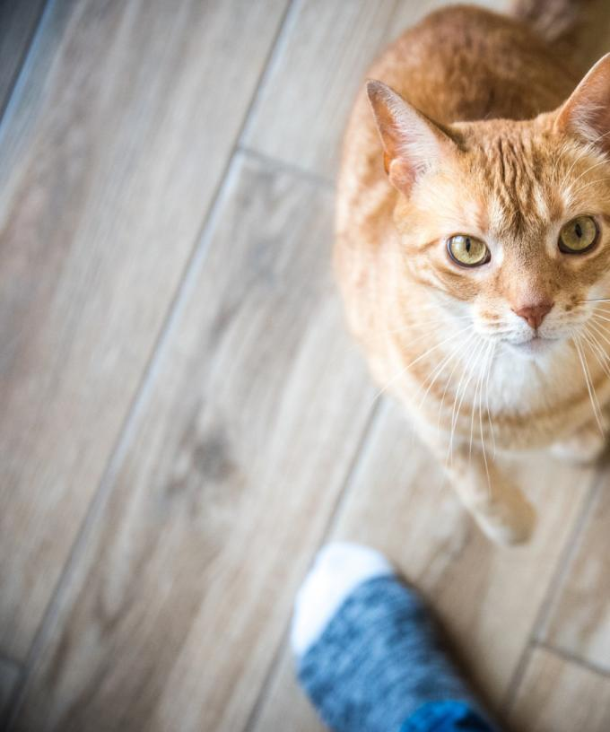 Rspca Is Offering Free Cat Adoptions During June