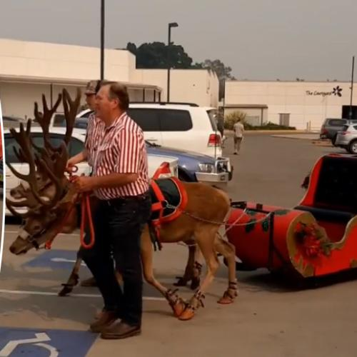 Australian Shopping Centre Slammed Over Real Reindeer Appearing In Their Christmas Parade