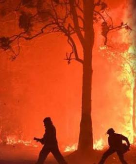 Former Model Tziporah Malkah Launches Bizarre Bushfire Tirade