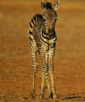 Monarto Set To Become Biggest Safari Park Outside Of Africa