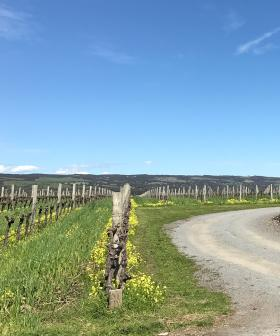 SAPOL Relax Restrictions On Wineries And Breweries, Prancing Pony Closure Order Withdrawn
