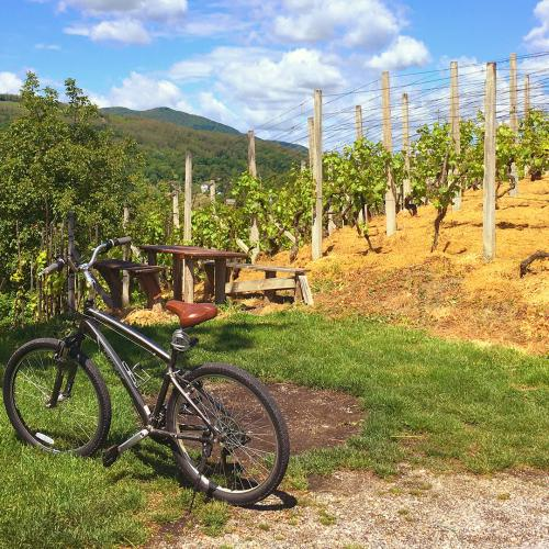 A New Wine Bike Trail Could Link Barossa, Clare Valley, Adelaide Hills & McLaren Vale