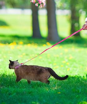 Cat Owners In Northeast Could Soon Be Forced To Walk Their Cats On A Leash