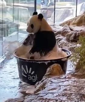 Wang Wang Has A PSA For Us To Remember To Wash Our Paws And It's So Cute!