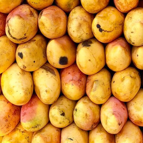 Mangoes Taken Off South Australian Supermarket Shelves After Maggots Found