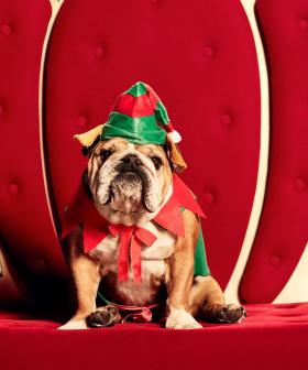 Westfield Is Doing Pet Photos With Santa, So The WHOLE Family Be Part Of The Christmas Tradition