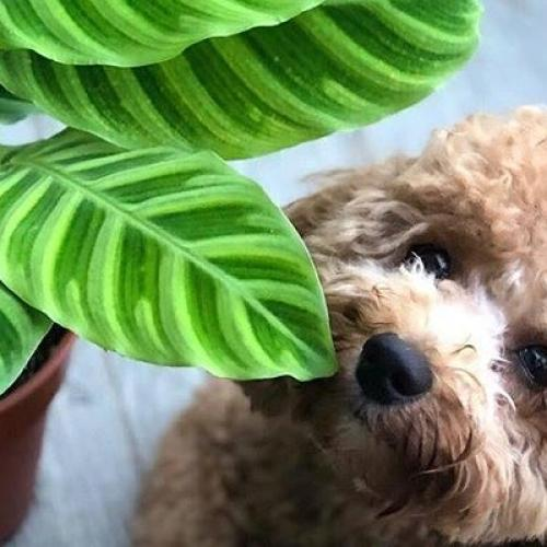 There's A Huge Warehouse Indoor Plant AND Pup Sale Coming To Adelaide