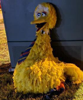 BREAKING: Big Bird Has Been RETURNED!
